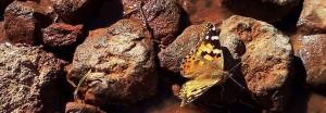 cropped-butterfly-beside-me.jpg